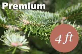 4+ foot Premium Nordmann fir Christmas tree