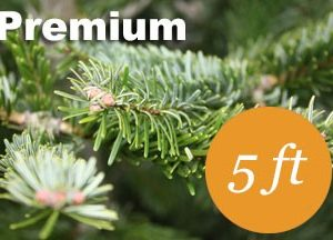 5+ foot Premium Nordmann fir Christmas tree