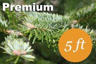 5+ foot Premium Nordmann fir Christmas tree