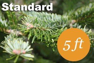 5+ foot Standard Nordmann fir Christmas tree