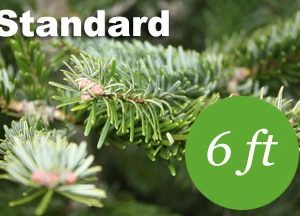 6+ foot Standard Nordmann fir Christmas tree