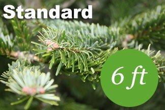 6+ foot Standard Nordmann fir Christmas tree