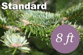 8+ foot Standard Nordmann Fir Christmas tree